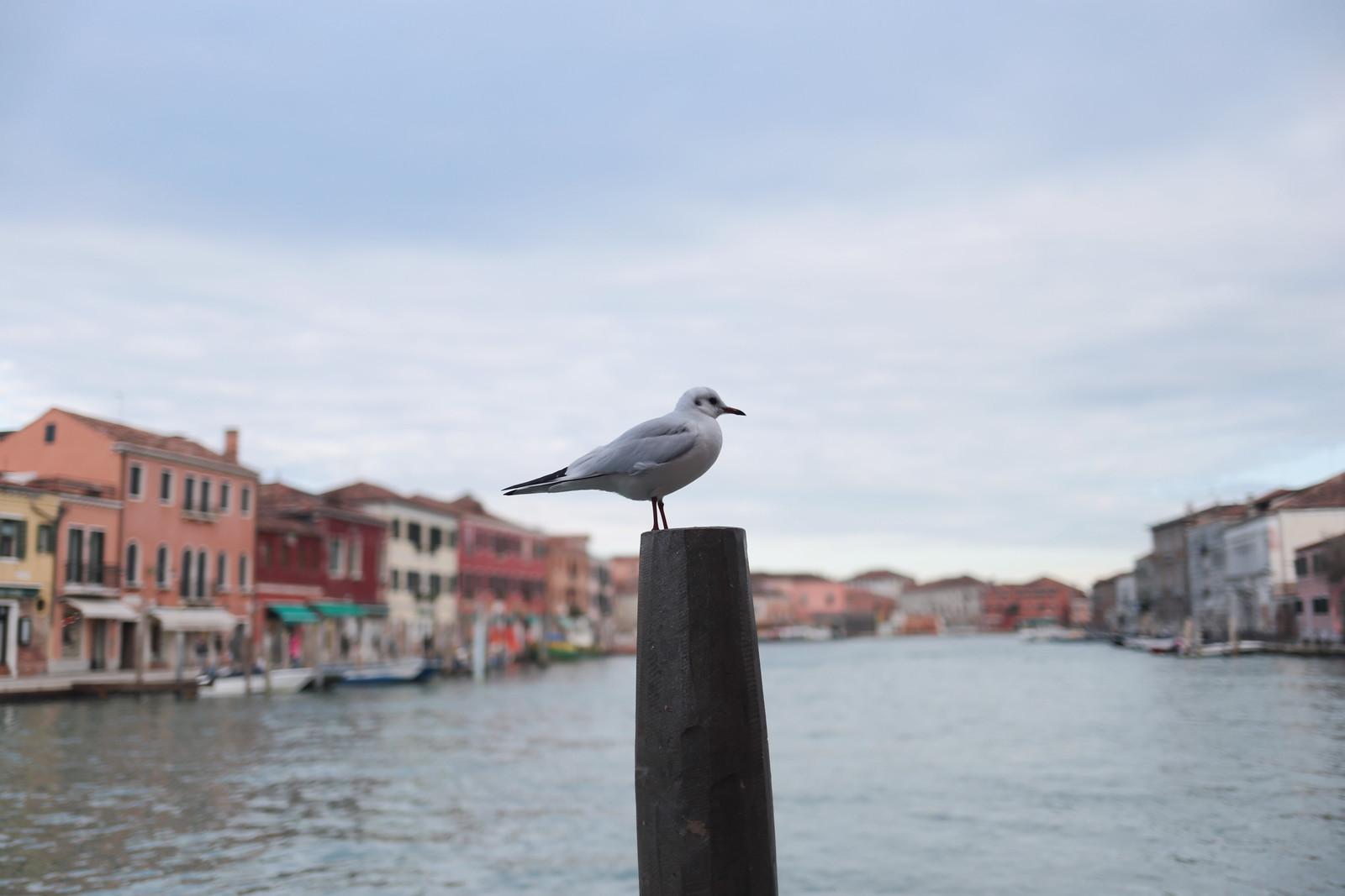 Venecia - Murano