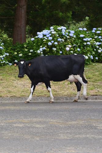 170702 Terceira (Azoren) - 08 Taberna Da Queimada 1012