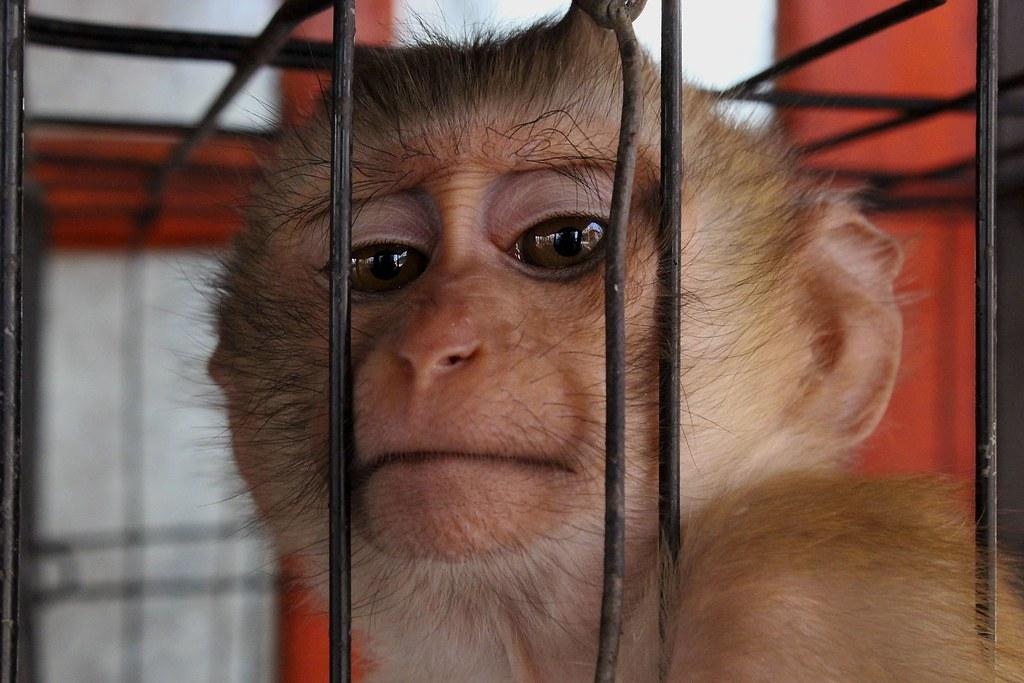Espectáculos con monos