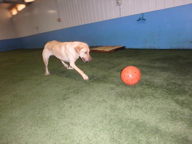 11/18/17 Indestructiball Chase !!!