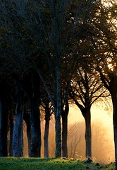 Sunset through the trees - Photo of Siracourt