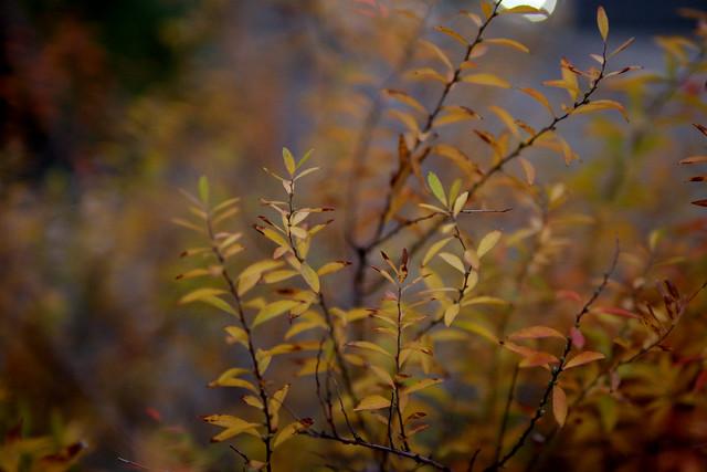 夕暮れの葉