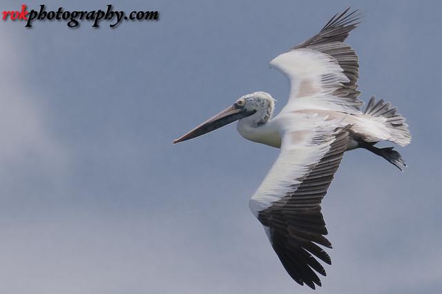 Vedanthangal Bird Sanctuary, India
