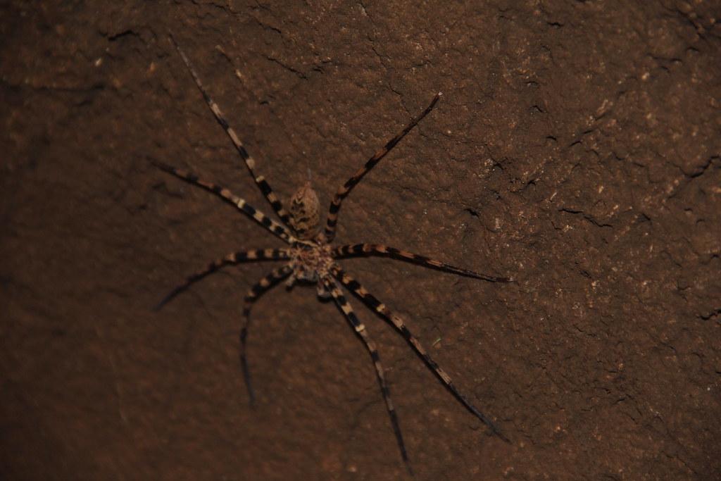 Spider, Nam Taloo Cave