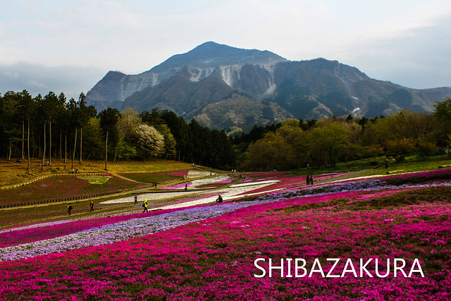 20111126_武甲山_0002_18