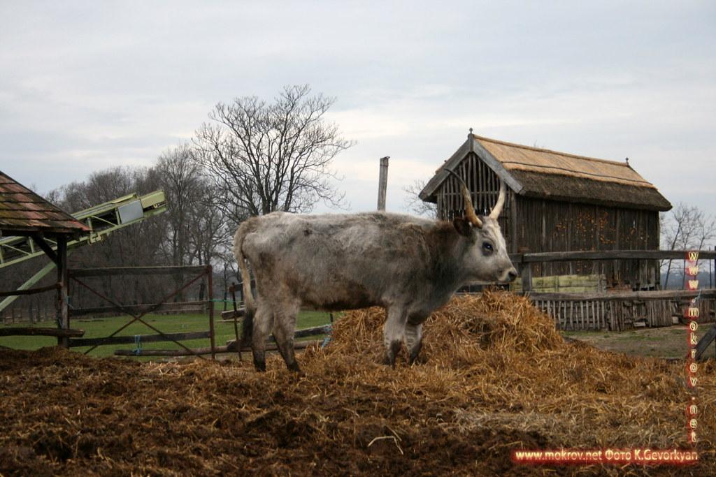 Конная Ферма Пуста  — Венгрия фотографии сделанные днем и вечером