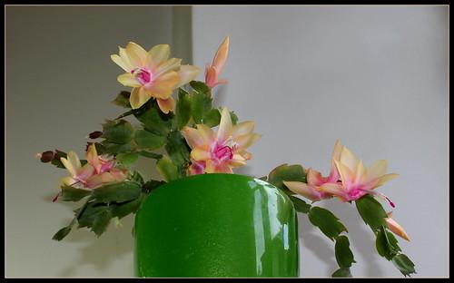 bouquets de souvenirs d'été - Page 3 38596946466_d3e66ae2a4