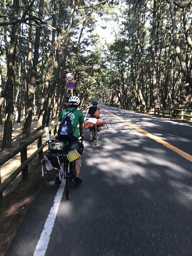 松林を走る