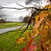 Mesmeric Autumn