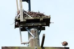 bird's nest platform