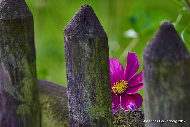 Versteckt am Gartenzaun