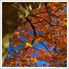 Autumn at the Arboretum-8375