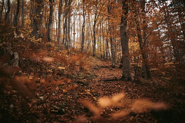 Last Autumn Vibes