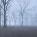 Freezing Fog by ~EvidencE~