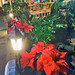 Poinsettias — Photo Courtesy Brian Wheat, AAF, PFCI, of Lafayette Florist, Gift Shop & Garden Center in Lafayette, Colorado. www.lafayetteflorist.com