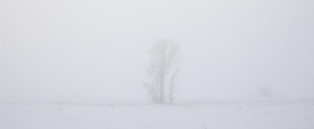 A Foggy Morning, Canon EOS 5D MARK IV, Sigma 24-105mm f/4 DG OS HSM | A