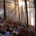 Shining Through by Hector Prada
