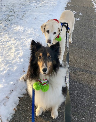 Winter walk with Jasper and Daisy