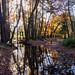 Autumn on the Roman Road