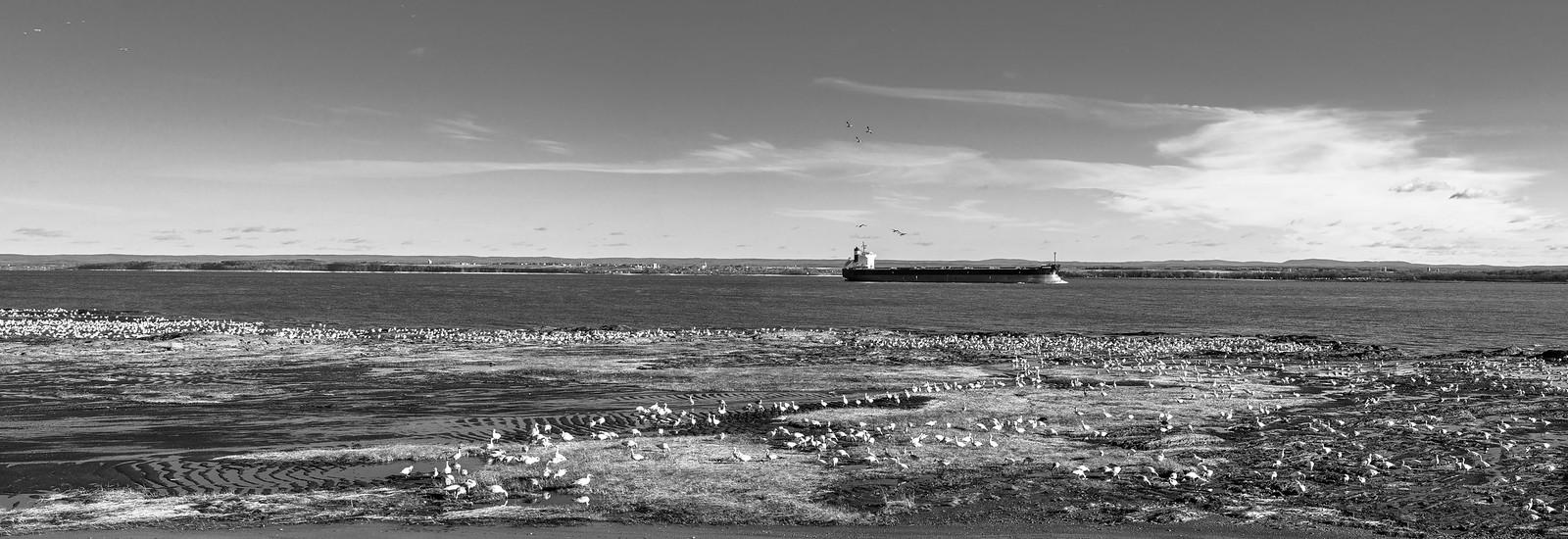 En regardant passer les bateaux (Ajour +1 N&B) 37683839834_4475728bc7_h