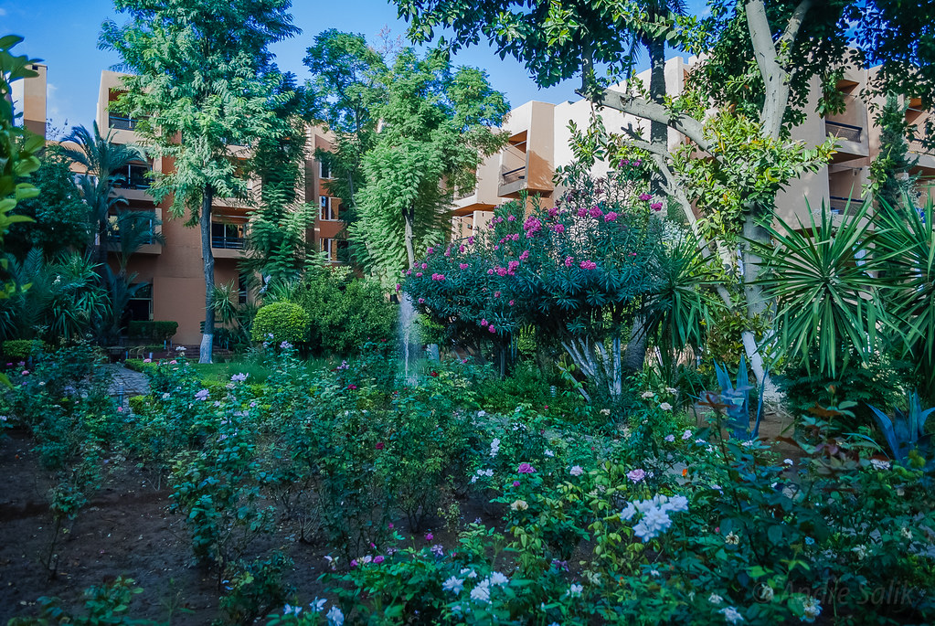 Lovely green !  Hôtel Semiramis Marrakech. 11:08:52 DSC_2385