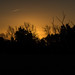 Sunrise Sillouette