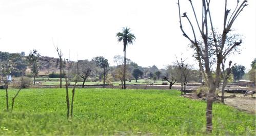 i-Kumbhagarh-Ranakpur-route (9)