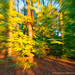 Autumn explosion (don't look too long to this image!) by Fotocollectief 2020