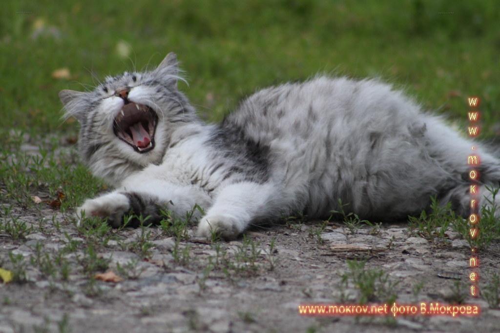Уличная кошка.