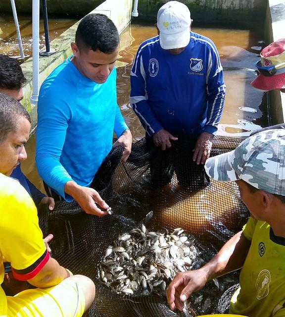 Investigadores UdeA le siguen la pista al crecimiento y reproducción de tilapias