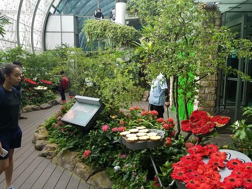 チャンギ空港 植物園(蝶がいる)