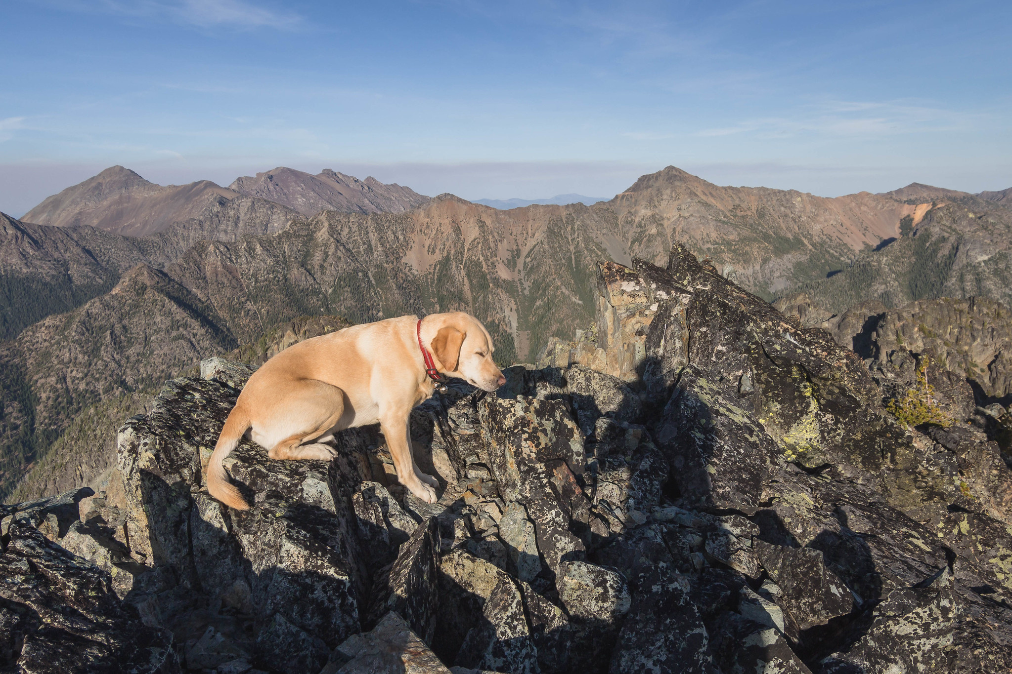 Summit dogs on Marsupial Peak