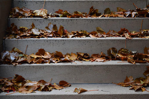 Leaves ascending a staircase