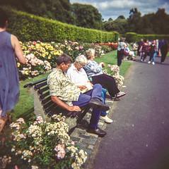Raheny Rose Festival 7.