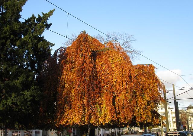Herbstliche Bäume in Pankow