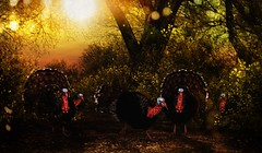 Turkey Run - HAPPY THANKSGIVING!!!