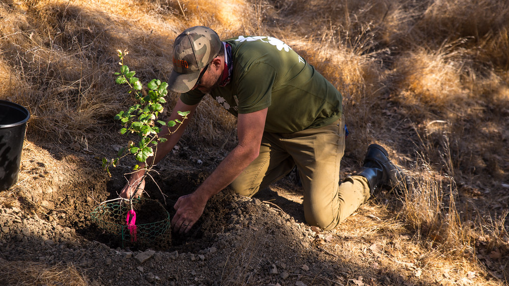 Santa Monica Mountains Planting: Calabassas