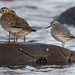 Plover and Knot