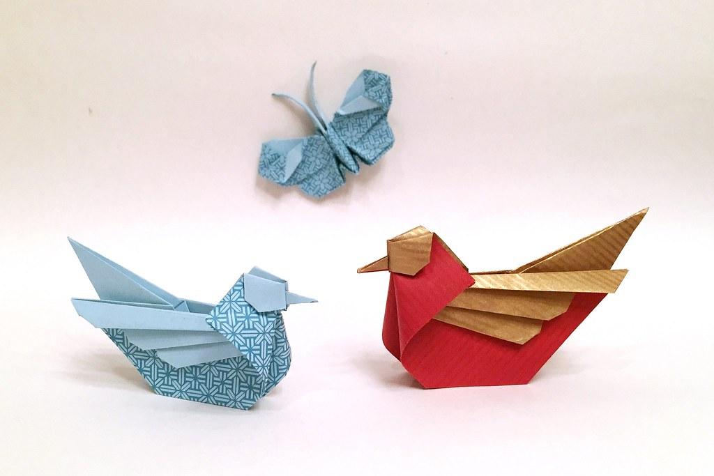 Papillon De Tabiano Viviane Berty Mandarin Bird Simon Flickr