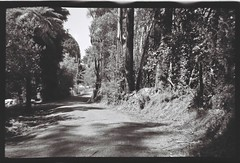 Gravel road among trees