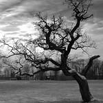 Bleak tree