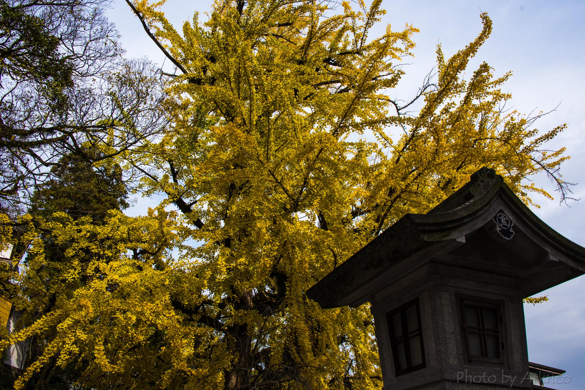 Autumn tints (3)