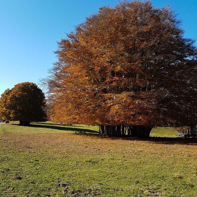 Herbst 20171014_114602