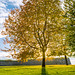 Autumn tree in Oslo by ESM Photographics