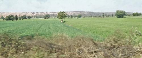 i-udaipur-chittorgarh  (5)