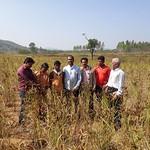 Crop Cutting in PRAGATI, Koraput Field Area on November 25, 2017
