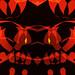 Tiger_Claw_001A