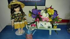 17 My Dolls