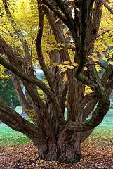 "Cincinnati – Spring Grove Cemetery & Arboretum ""Tree Trunk Entanglement"""