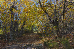 In the shade of chestnut - Photo of Ferrières-Poussarou